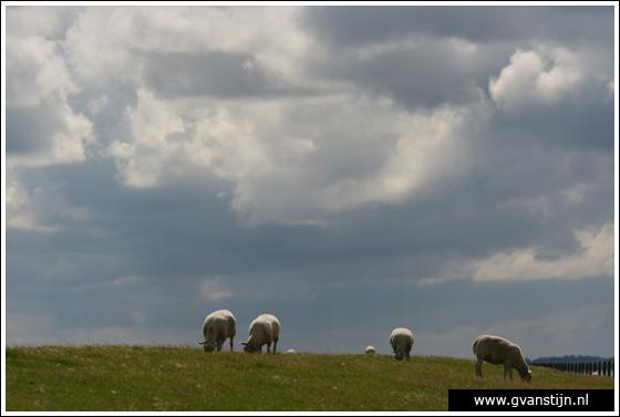 Coll2007-03 Dijk Waddenzee bij Den Oever  345_1192.jpg