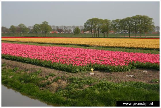 Veld01 Bollenvelden Noord-Holland<br><br> IMG_1016.jpg