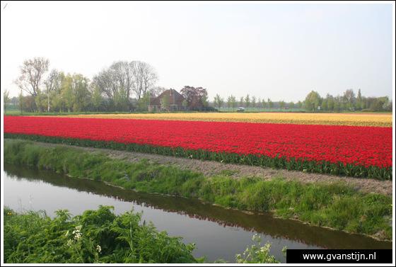 Veld01 Bollenvelden Noord-Holland<br><br> IMG_1024.jpg