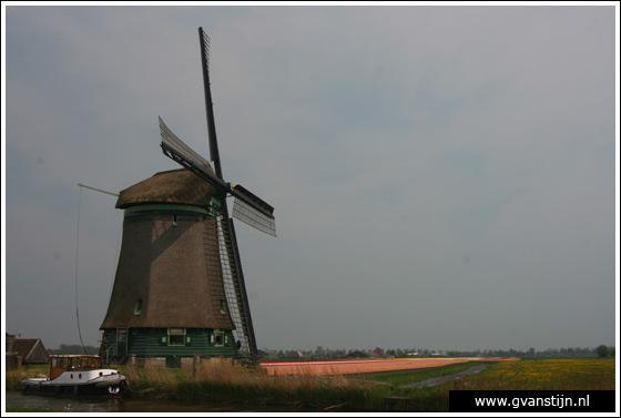Veld02 Bollenvelden Noord-Holland<br><br> IMG_1134.jpg