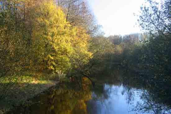 Herfsttinten-Bos Avondzon op de bomen<br><br> 2100_Herfst_Amsterdamse_Bos_Bovenkerk_2979.jpg