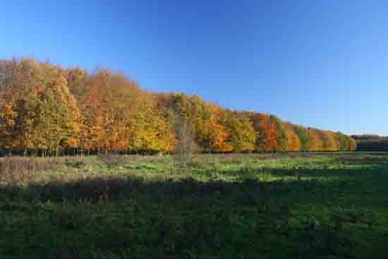 Herfsttinten-Bos Avondzon op de bomen<br><br> 2110_Herfst_Amsterdamse_Bos_Bovenkerk_2983.jpg