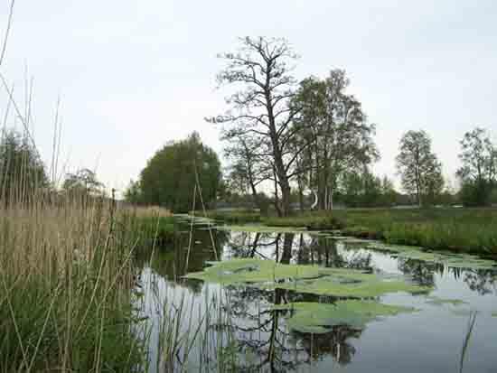 Kleine-Noord Prachtige oeverlanden bij de Amstelveense Poel<br><br> 2400_Kleine_Noord_0785.jpg