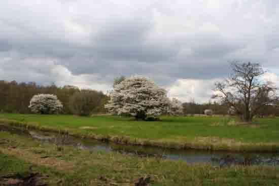 Kleine-Noord Bloeiende krentenbomen bij het Zwarte pad<br><br> 2560_Kleine_Noord_0898.jpg