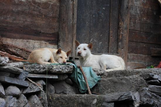 Datang Street life in Datang Korte rokjes Miao dorp - Guizhou<br><br> 0700_1605.jpg