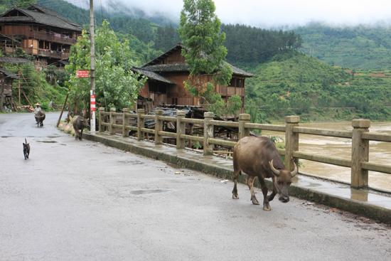 Rongjiang De rit van Rongjiang naar Zhaoxing ging door agrarisch gebied<br><br> 0940_1788.jpg