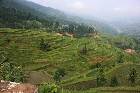 Tang_An Rijstterrassen boven aan de berg bij Tang An Dong village<br><br> 1060_1864.jpg