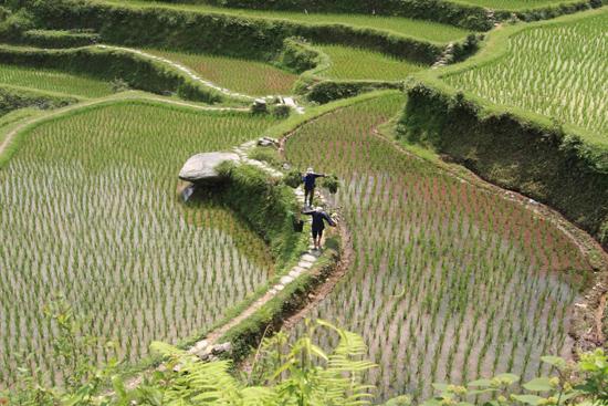 Tang_An Schitterende rijstterrassen tussen Tang An en Zhaoxing<br><br> 1210_1931.jpg
