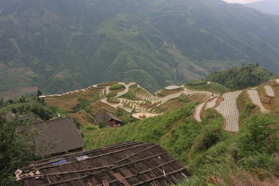 Longji De geweldige rijstterassen van Longji bij Pingan.<br>In alle opzichten adembenemend. Voor ons h�t hoogtepunt van de China- tour<br><br> 1600_2221.jpg