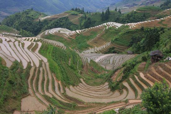 Longji Rijstterrassen van Longji bij Pingan<br><br> 1610_2229.jpg