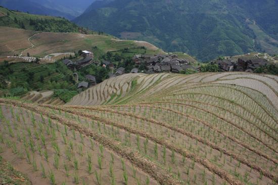 Longji Rijstterrassen van Longji bij Pingan<br><br> 1640_2277.jpg