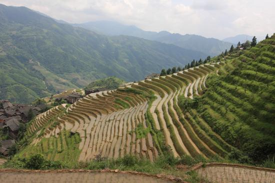 Longji Rijstterrassen van Longji bij Pingan<br><br> 1660_2286.jpg