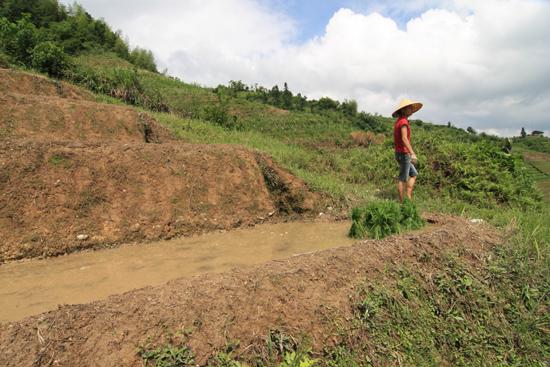 Longji De jonge rijstplantjes staan al gereed om te worden gepoot<br><br> 1680_2300.jpg