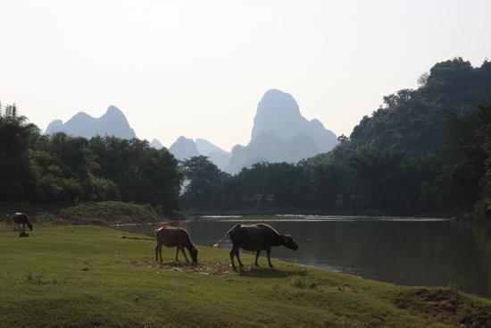 Yangshuo1 Schitterend landelijke omgeving na de Li rivier te hebben doorwaad<br><br> 1980_2489.jpg