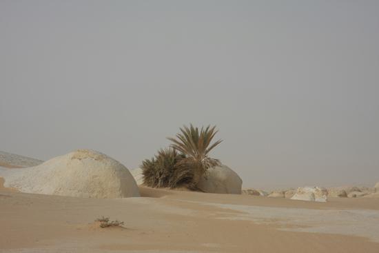 White-Desert Kalksteenformaties in The White Desert ten noordoosten van Farafra 0820-White-Dessert-near-Farafra-2592.jpg