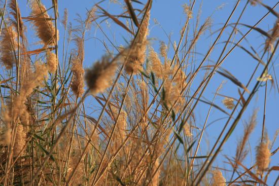 Elephantine1 Vogelspotten rondom Elephantine Island  1610-Elephantine-Island-vogelspotten-3534.jpg