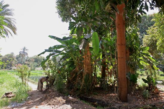 Elephantine2 Nubisch dorpje op Elephantine Island 1730-Elephantine-Island-Nubisch-dorp-3755.jpg