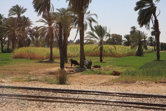 Luxor Onderweg naar Luxor 2120-Op-weg-naar-Luxor-4049.jpg