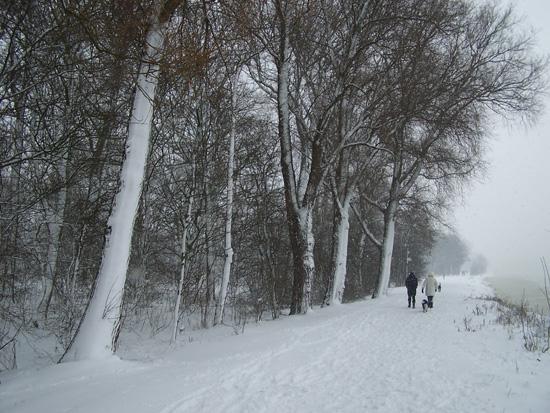 Hoornsneeuw Julianapark 800_4814.jpg