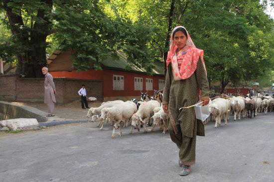 Pahalgam2 Nomaden met kudde schapen<br><br> 0650-Pahalgam-Kashmir-2942.jpg