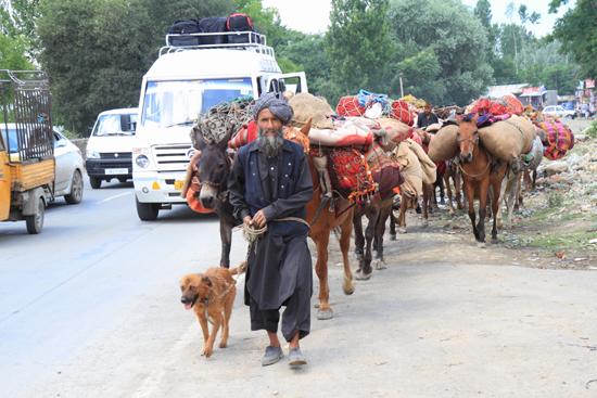 Sonamarg Nomaden<br><br> 1430-Sonamarg-Kashmir-3582.jpg