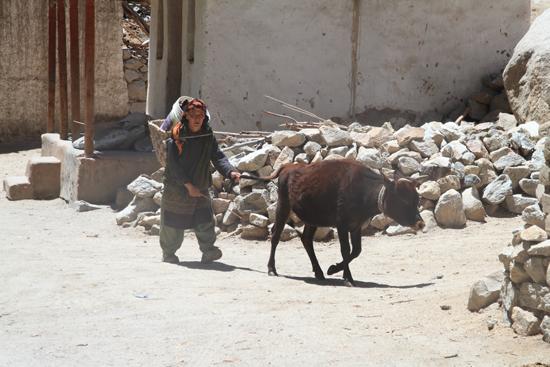 Chemday Streetlife rond Leh<br><br> 3230-Omgeving-Leh-4791.jpg