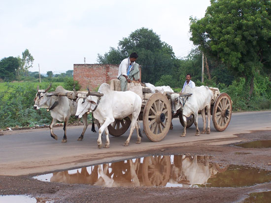 Khajuraho1 Mooie rit naar Khajuraho door agrarisch gebied 100_4017.jpg