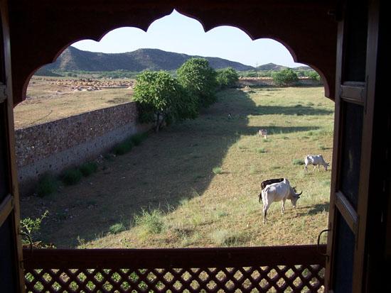 Pushkar Uitzicht vanuit onze slaapkamer in bedevaartplaats Pushkar Bedvaartplaats-Pushkar-India_3509.jpg