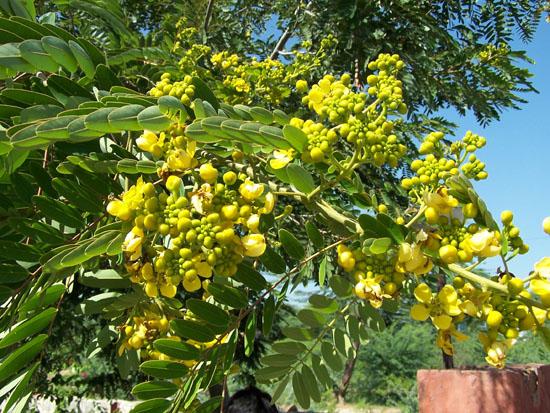 Pushkar  Bloemen_3487.jpg