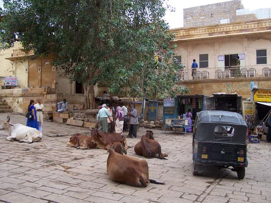 Jaisalmer Stadsplein in het centrumKoeien en riksja's Jaisalmer-stadscentrum_2969.jpg