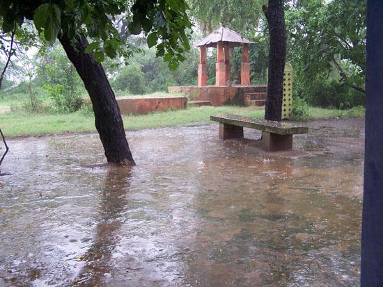 Bharatpur Korte maar hevige moessonbui, even schuilen in tempel Moessonregen-Keoladeo-park-Bharatpur_3789.jpg