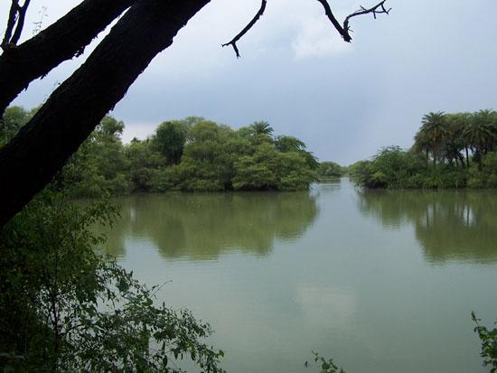 Bharatpur Keoladeo vogelpark - mooi natuurpark Natuurschoon-Keoladeo-Park-Bharatpur_3792.jpg