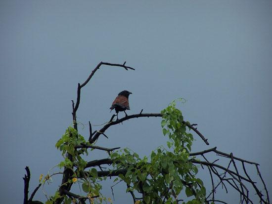 Bharatpur Mooie kleurige vogel Vogelsoorten-Keoladeo-Park-Bharatpur_3796.jpg