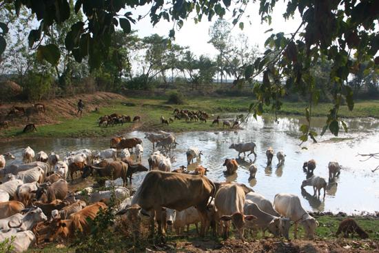 Adivasi-Tour1 Watering place for the cattle Drinkplaats voor het vee 2150_4424.jpg