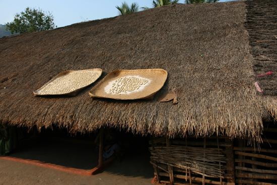 Adivasi-Tour2  Zaden worden te drogen gelegd op de daken 2320_4568.jpg