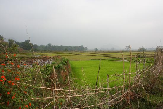 Adivasi-Tour3 Rice-fields around Bissam Cuttack Rijstvelden rondom Bissam Cuttack 2540_4787.jpg