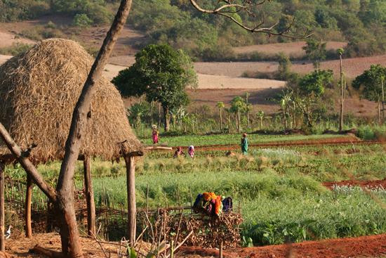 Adivasi-Tour6   3040_5242.jpg