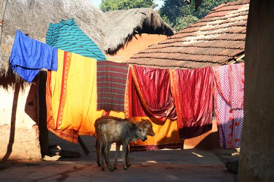 Adivasi-Tour8 Saris hanging at the clothes-line Sari's aan de waslijn 3260_5453.jpg