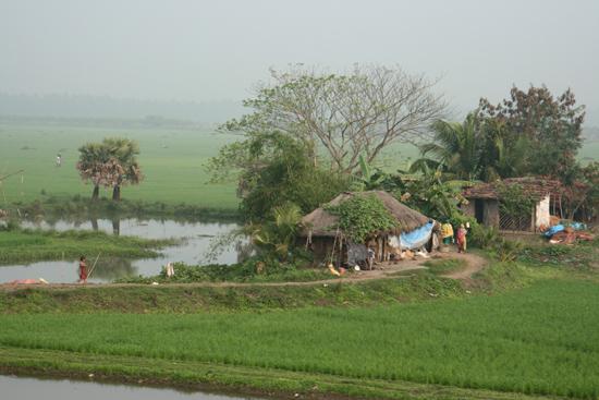 Kolkata1 Enormous rice fields seen from the train to Calcutta Enorme rijstvelden gezien vanuit de treinvan Orissa naar Kolkata/Calcutta  4050_6161.jpg