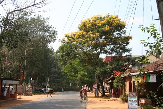 Periyar Ook buiten het park nog mooie bomen IMG_7067.jpg