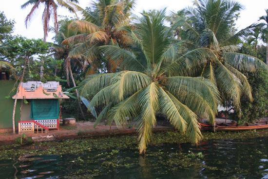 Backwaters Fraaie palmen IMG_7120.jpg