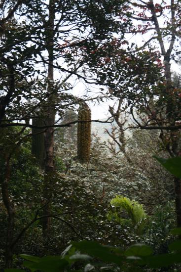 Madikeri Onder leiding van locale gidszware bergwandeling gemaakt IMG_8323.jpg