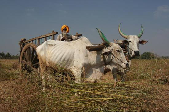 Boerendorpje Echt Indiaas tafereel IMG_9038.jpg