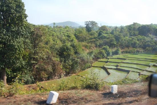 Goa Rijstvelden IMG_9258.jpg