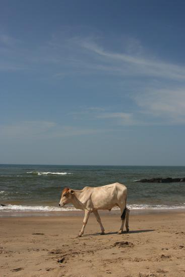 Goa Flaneren op het strand IMG_9389.jpg