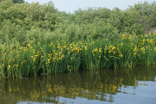Macro03 Zwanenwater bij Callantsoog<br><br> Zwanenwater-4209.jpg