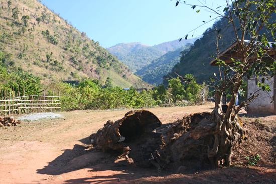 Kalaw1 Trekking langs de dorpen van de bergvolkeren Oude holle boomstammen   2560_6473.jpg