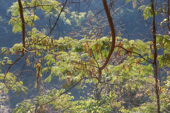 Kalaw1 Trekking langs de dorpen van de bergvolkeren   2600_6510.jpg