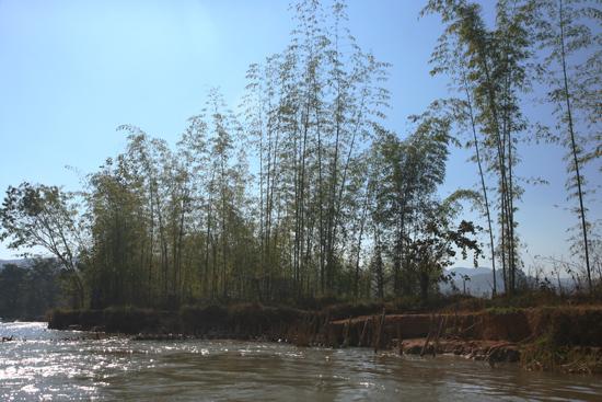 Inlemeer1 Inle lake Hoge bamboebomen vlakbij Indein   3130_7260.jpg