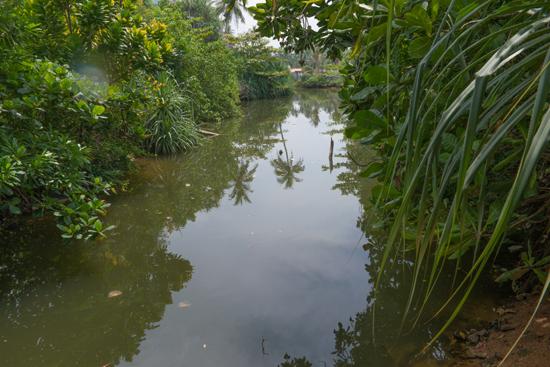 Balapitiya - Boottocht op de Madu rivier  Prachtige natuur-0140